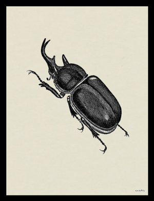VANILLA FLY - HORN BEETLE